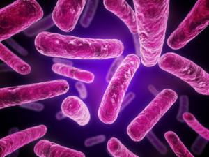 Manuka Oil Conquers Deadly MRSA Bacteria Where Conventional Medicine Fails MRSA-bacteria-300x225