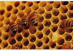 15 Alternative Uses For Honey Honey-comb-300x209