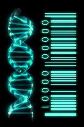 Biophotonics – The Science Behind Energy Healing Biophotonics-the-Science-behind-Energy-Healing-DNA-as-Genetic-Barcode