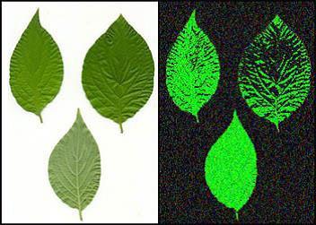 Biophotonics – The Science Behind Energy Healing Biophotonics-the-Science-behind-Energy-Healing-Emission