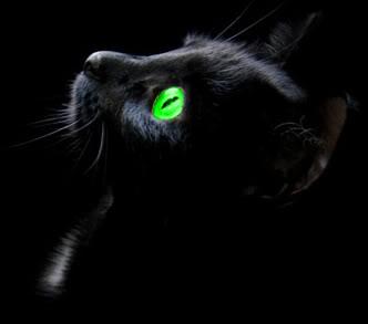 Коты-Воители. Мгла. Сияние темноты Nightwatcher