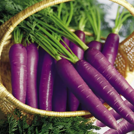 Plants and Potions Purple-carrots
