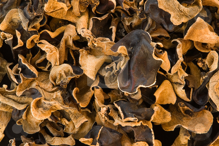 SƯU TẬP NẤM - Page 4 Cutcaster-photo-100008771-Judasohr-Auricularia-auricula-judae-Auricularia-polytricha-Black-Fungus