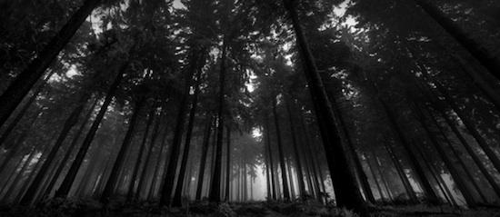 TERRAVISIÓN | Biblioteca de Países Fondos-pantalla-blanco-negro-bosque