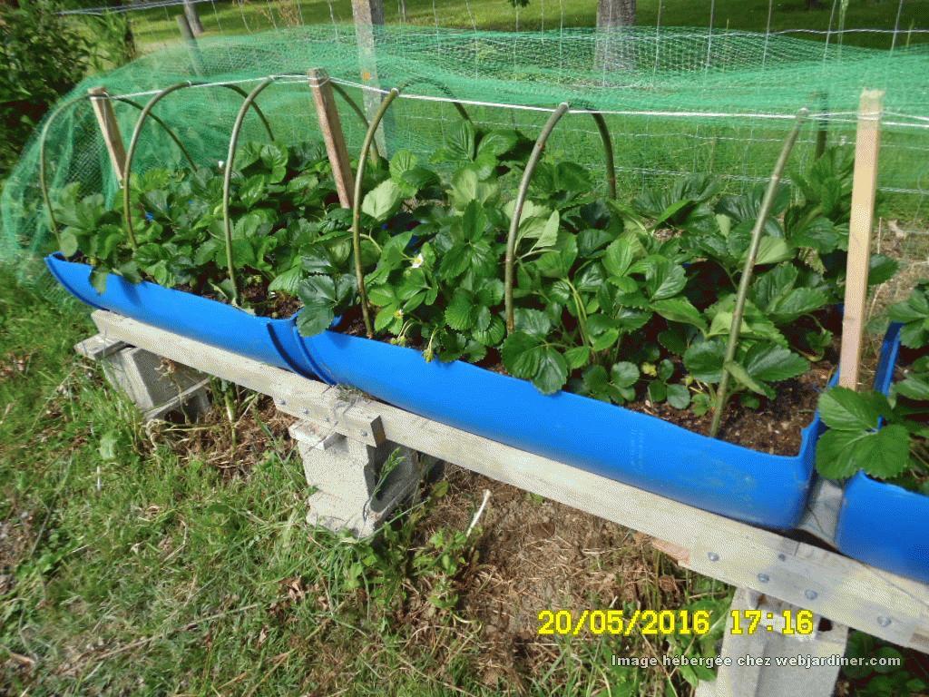 bac de culture pour  fraise ou legume MFvq