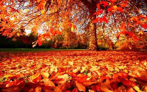HAPPY AUTUMNAL EQUINOX 2019 Autumn-Wallpaper-autumn-35867786-1280-800_s