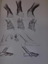 [bank] livres pour apprendre le dessin HONGRIE-JENO-BARCSAY-ART-MONOGRAPHIE-ANATOMIE-HOMME-DESSINS-IN4-1982-av