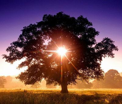 Гороскоп деревьев: дерево-покровитель и ваш характер Goroskop-derevev