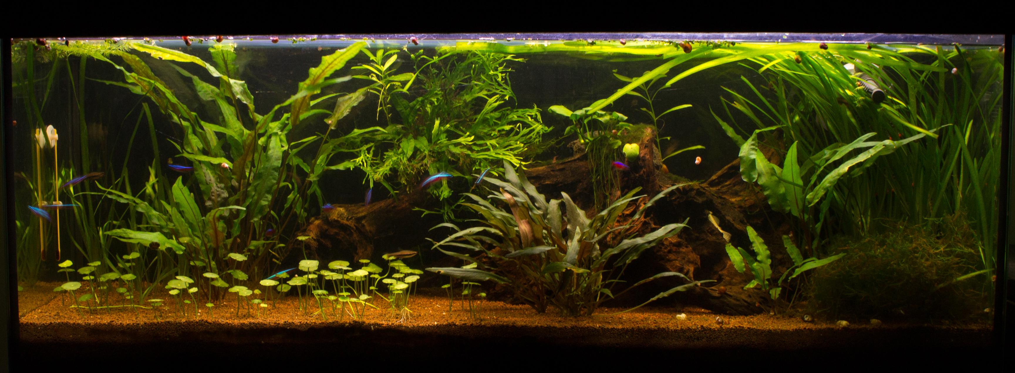 JmenBaLeStix's Aquarium 120L06042014