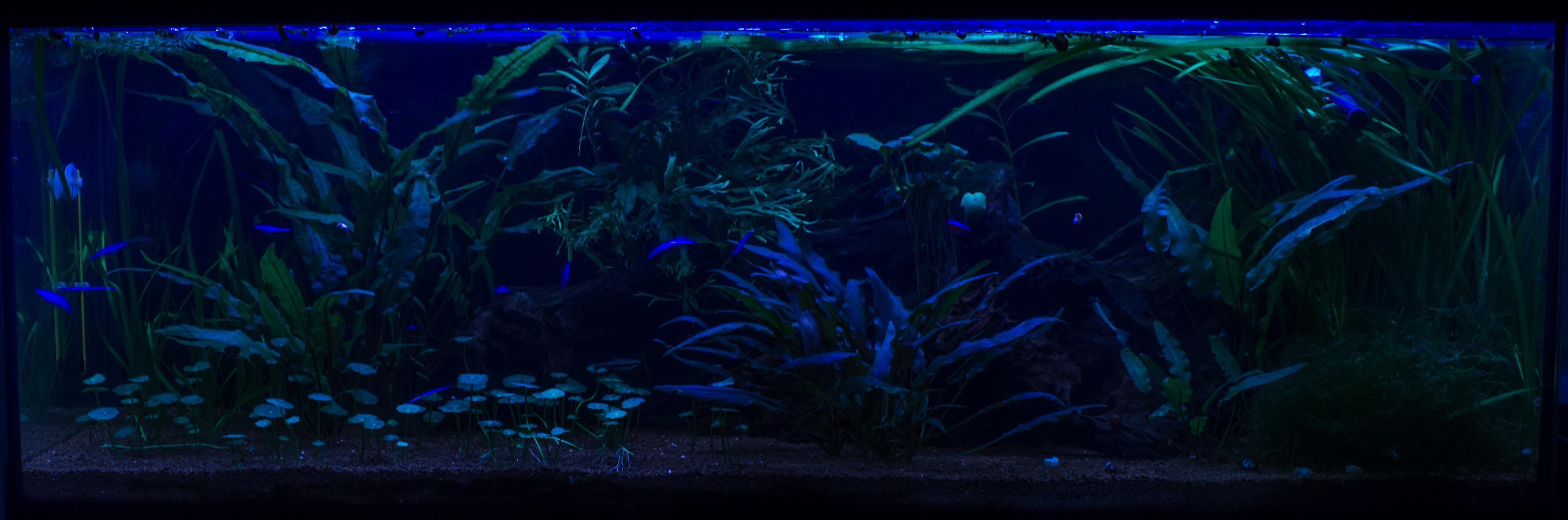 JmenBaLeStix's Aquarium 120L06042014N
