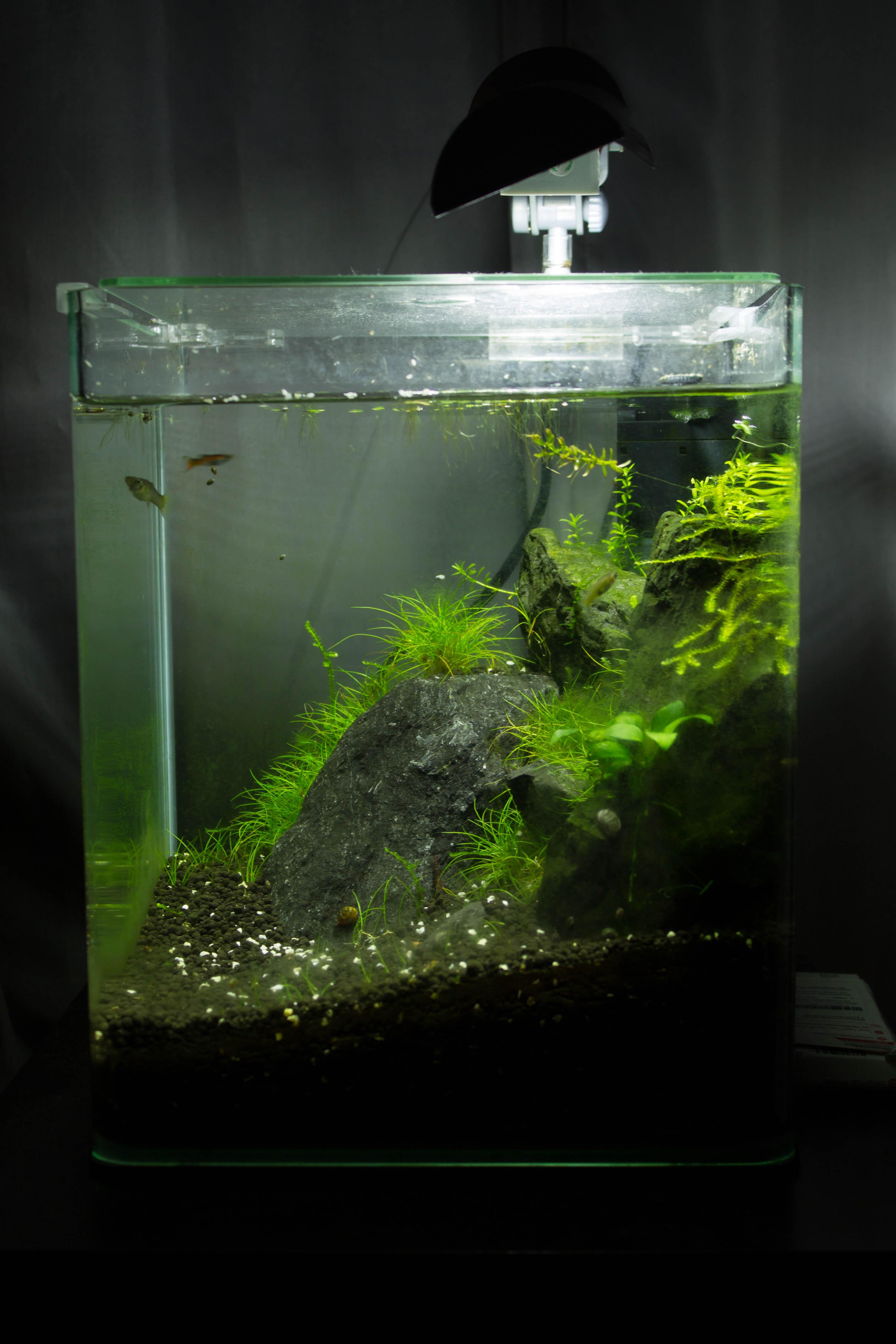 JmenBaLeStix's Aquarium 20LC05022014