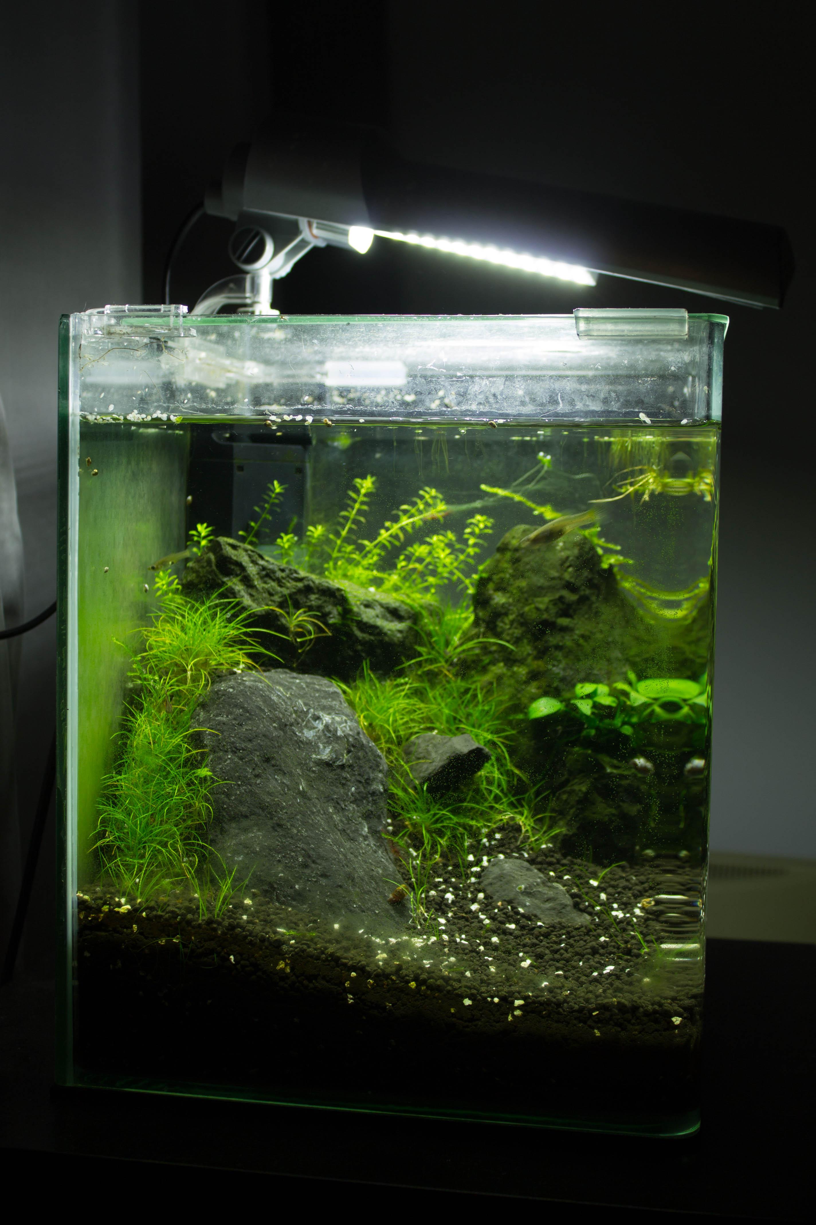 JmenBaLeStix's Aquarium 20LF05022014