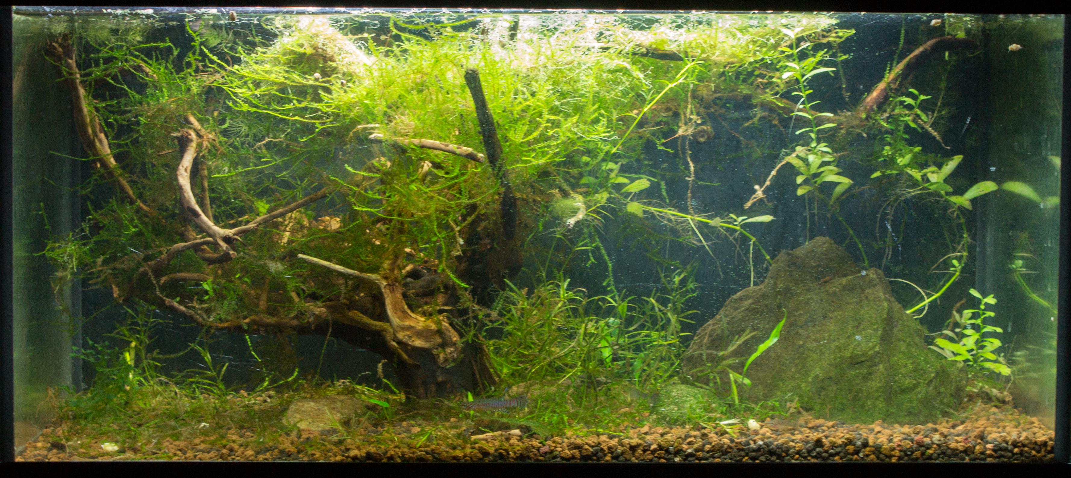 JmenBaLeStix's Aquarium 54L06042014