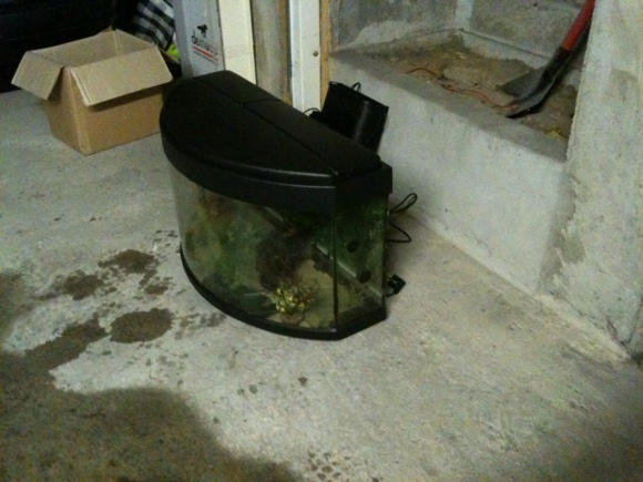Que faire de mon aquarium 120L ? Bombe2