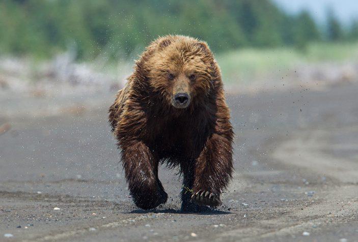 [C.J] 'Akira Rinne Running-bear-e1499815546746
