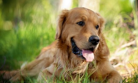 Как обработать собаку от клещей.  1464604237_2164