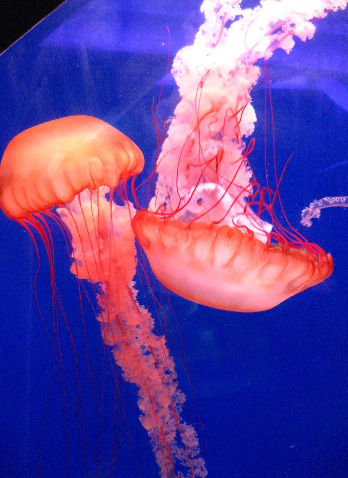Bestiario de Personajes Jellyfish