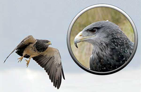"""Конкурс """"Птицы"""" Aguiya"""