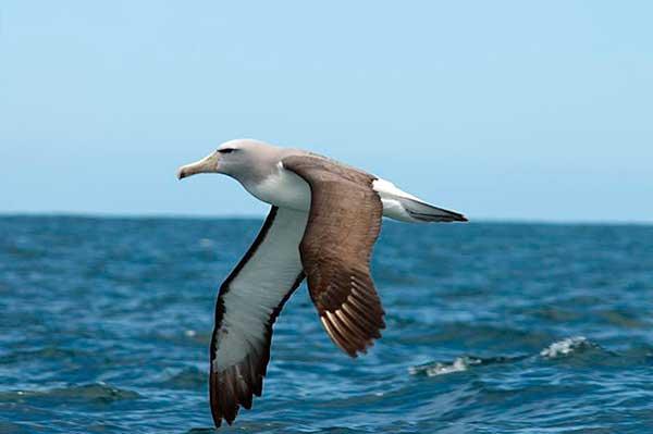 "Конкурс ""Птицы"" Albatros"