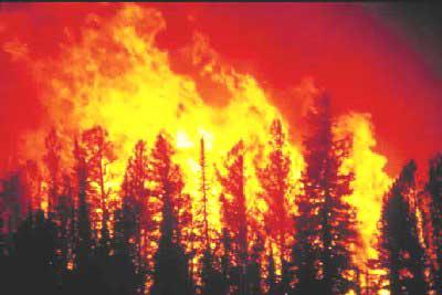 New Fire/Santa Cruz CA. Wildfire2