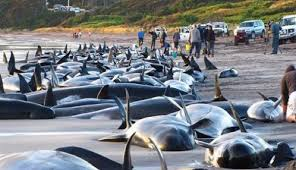 Mass Animal Deaths for 2014 Download