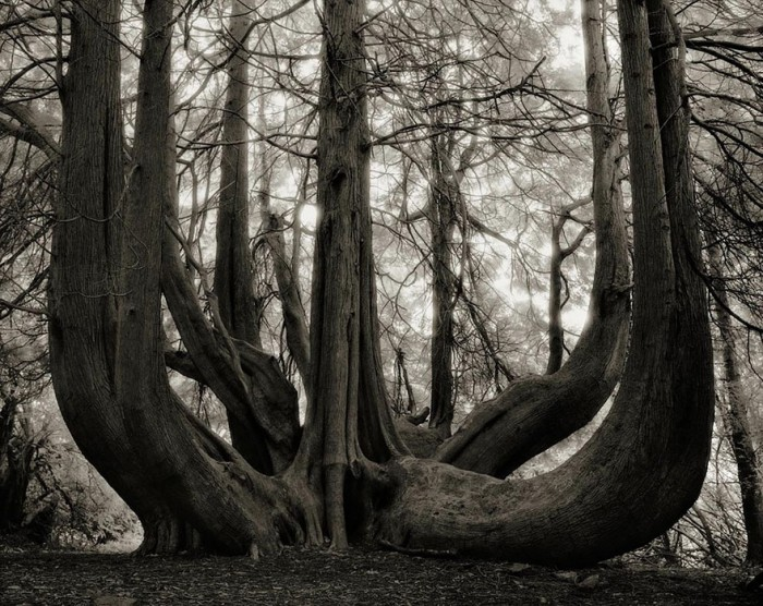 Woman Spends 14 Years Photographing World's Oldest Trees Ancient-trees-beth-moon-14-e1420823351828