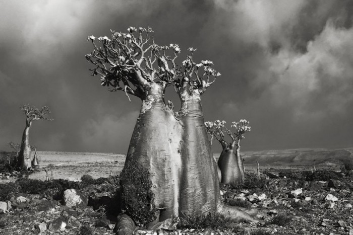 Woman Spends 14 Years Photographing World's Oldest Trees Ancient-trees-beth-moon-5-e1420823004298