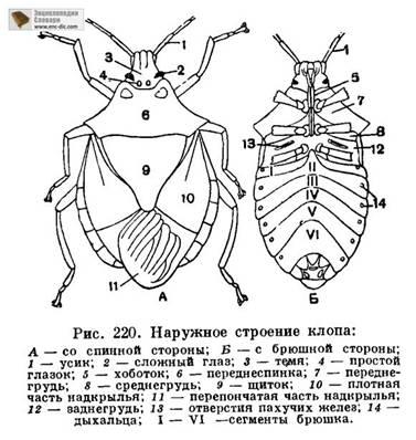 Метафизика насекомых Bug_scheme
