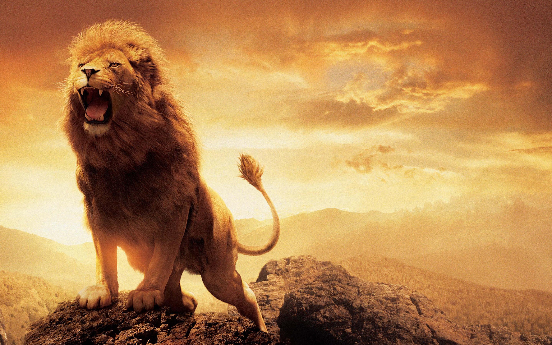 Программные шарики из воска.  Narnia_lion_aslan-widescreen_wallpapers