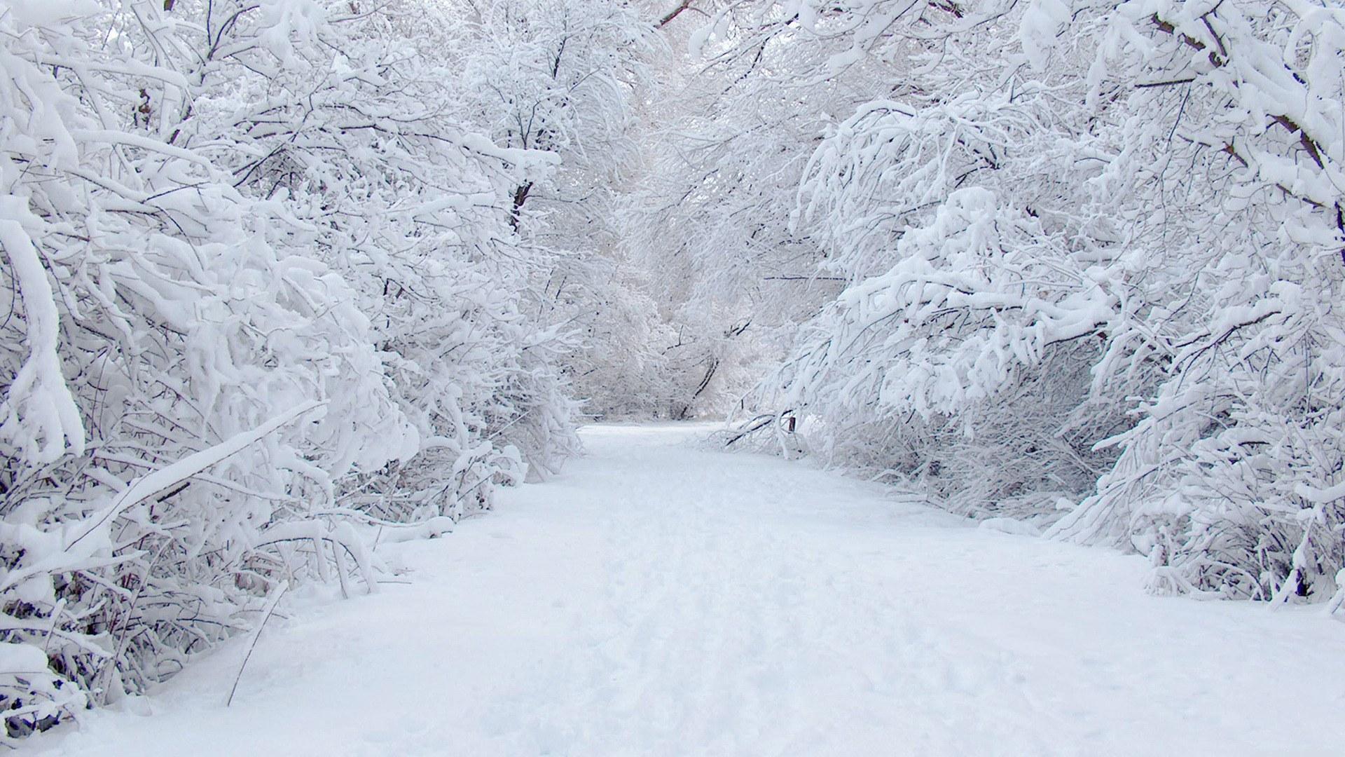 Wallpaper ไหนว่าปีนี้จะหนาวสุดในรอบ 30 ปี 50 Pic 229036-Sepik