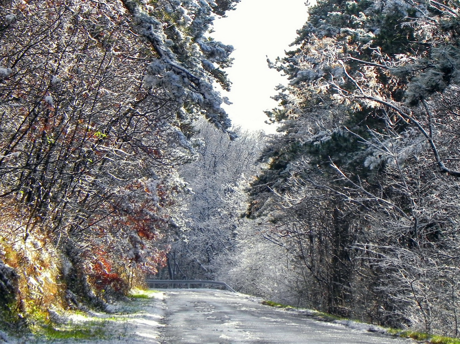 Wallpaper ไหนว่าปีนี้จะหนาวสุดในรอบ 30 ปี 50 Pic 229089-svetik