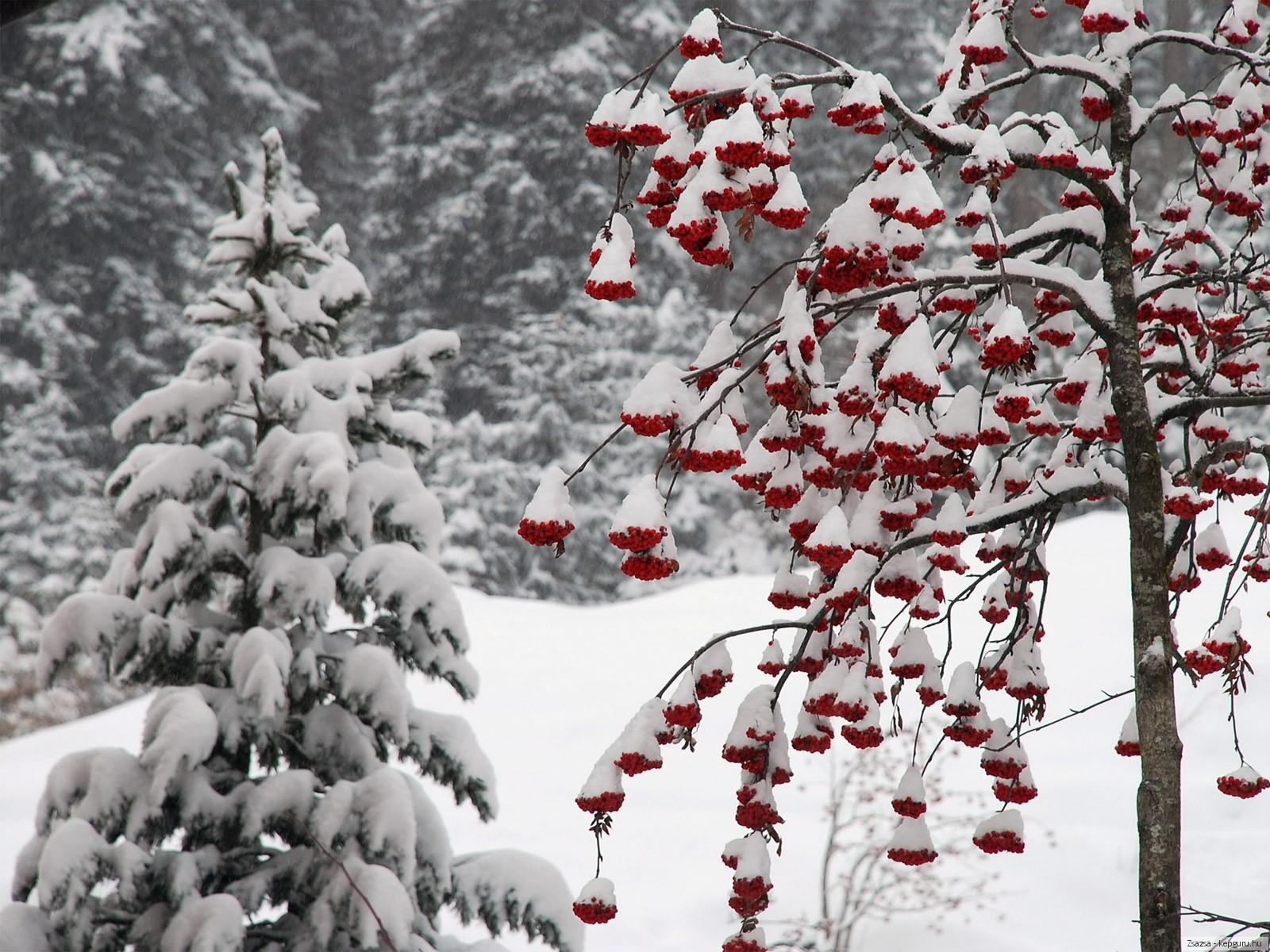 Wallpaper ไหนว่าปีนี้จะหนาวสุดในรอบ 30 ปี 50 Pic 228866-svetik