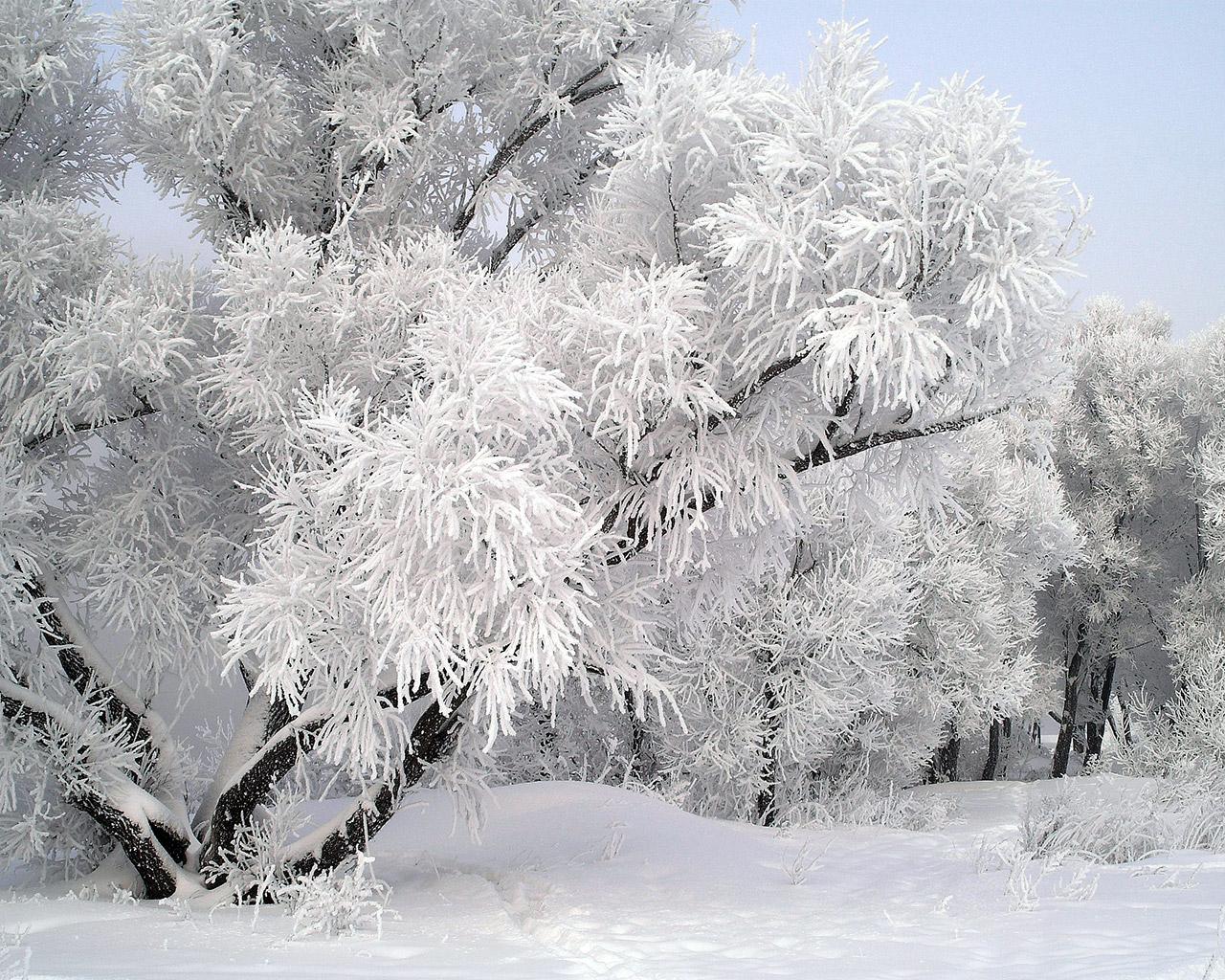Wallpaper ไหนว่าปีนี้จะหนาวสุดในรอบ 30 ปี 50 Pic 172104-foxixol