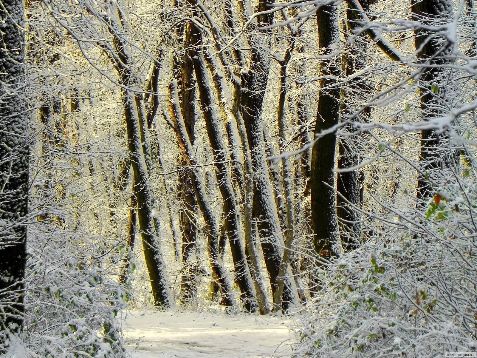 Wallpaper ไหนว่าปีนี้จะหนาวสุดในรอบ 30 ปี 50 Pic 229209-svetik