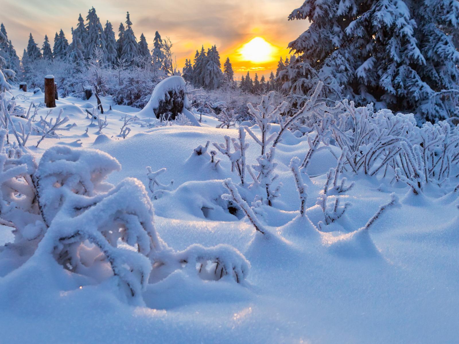 Wallpaper ไหนว่าปีนี้จะหนาวสุดในรอบ 30 ปี 50 Pic 228527-svetik