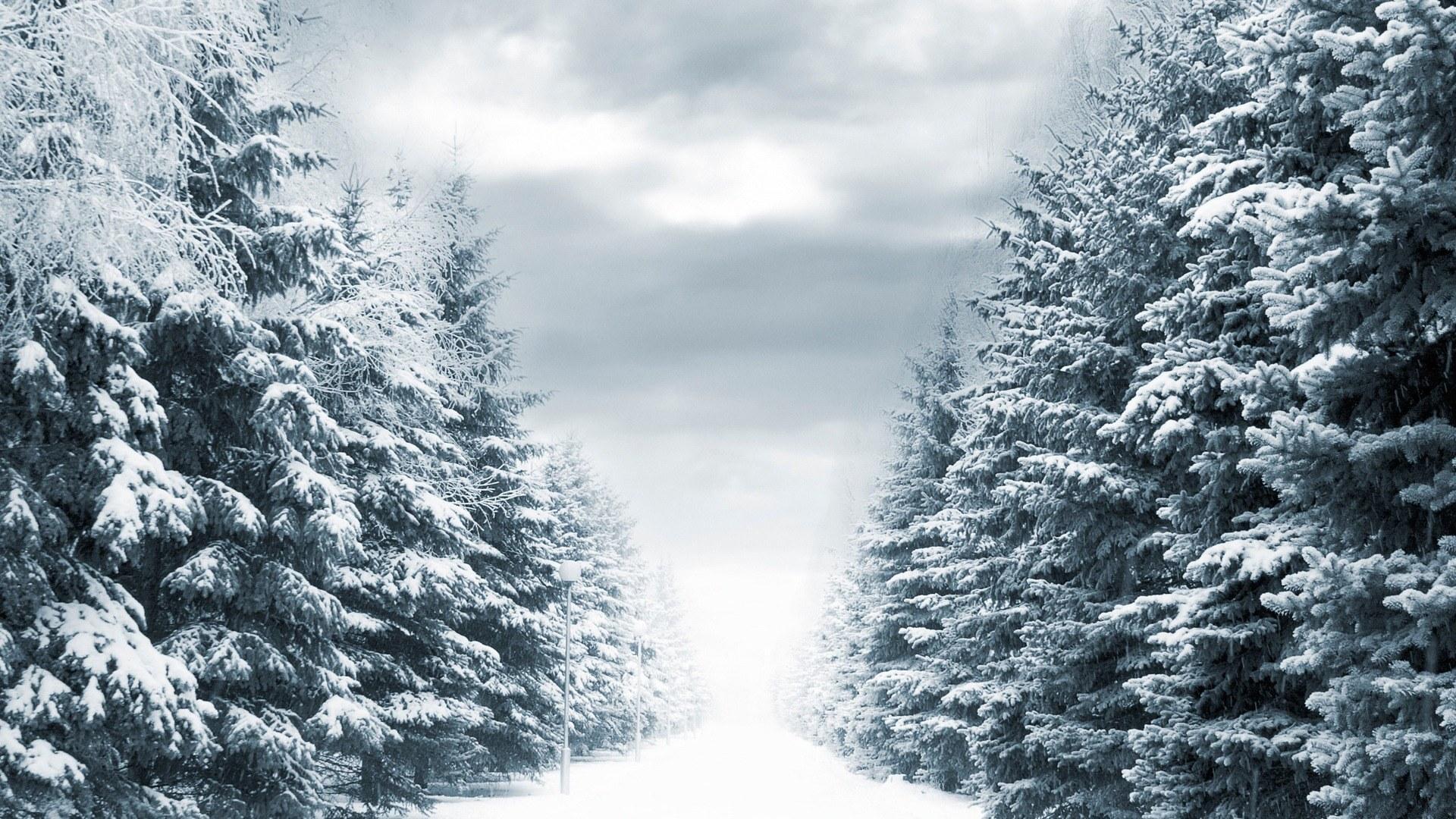 Wallpaper ไหนว่าปีนี้จะหนาวสุดในรอบ 30 ปี 50 Pic 230389-Sepik