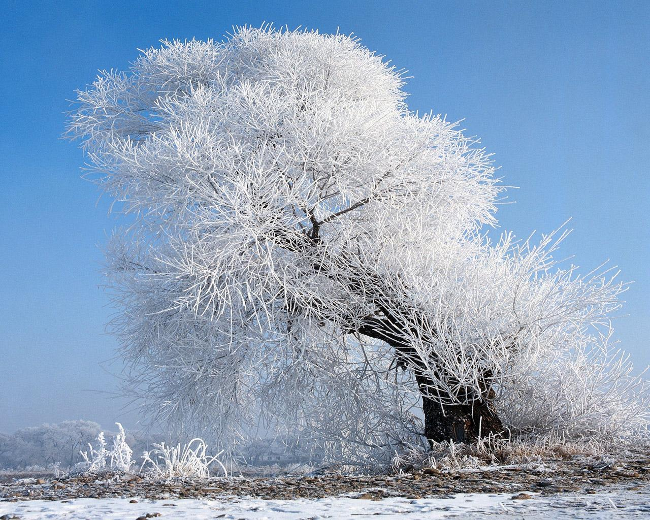 Wallpaper ไหนว่าปีนี้จะหนาวสุดในรอบ 30 ปี 50 Pic 230925-frederika