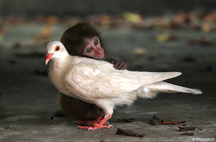 Volim te kao prijatelja, psst slika govori više od hiljadu reči Najbolji-Drugari