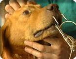 Pétitions chiens appâts pour la pêche aux requins Chien_appat