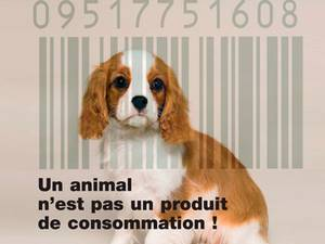 Animalement Correct Sr_sendcard_794e23874d