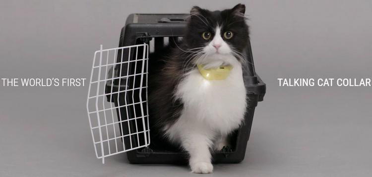 Переводчик с кошачьего языка Catterbox1