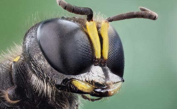 Просто естественный отбор по Дарвину (?) — или Генная инженерия живых существ Aff