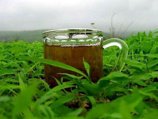 العلاج عن طريق الشاي Tea-green