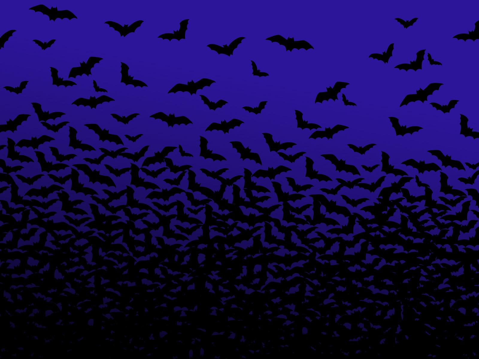 Bat Radar (Echolocation) and other bat matters Bats