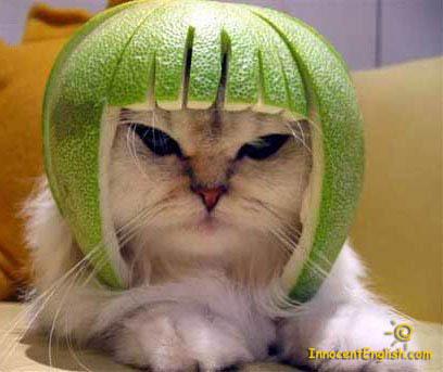 [Jeu] Association d'images - Page 19 Watermelon-hat-cat