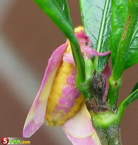 حشرة جميلة وغريبة 635304329