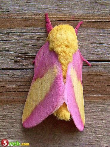 حشرة جميلة وغريبة 927833870
