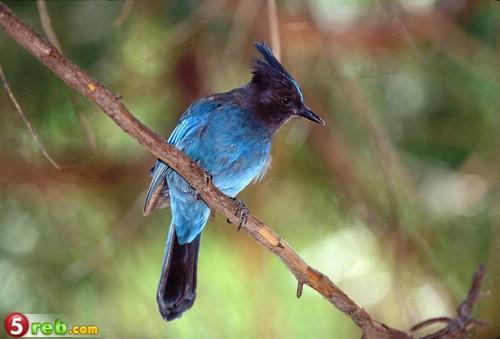 اجمل صور الطيور 14bd886315