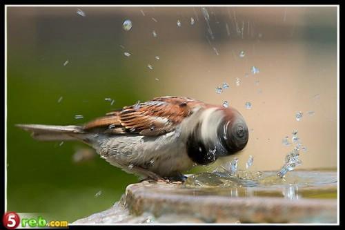 اجمل صور الطيور 5ba69549f7