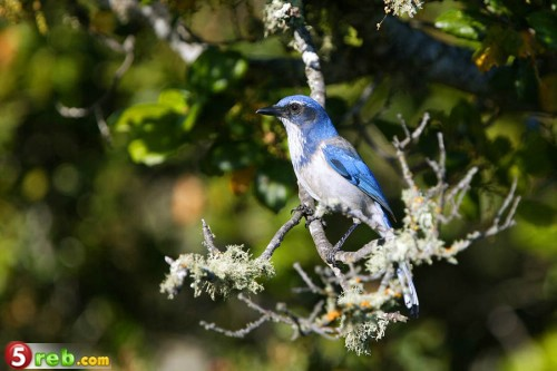 اجمل صور الطيور C0269dad08